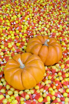Mini Pumpkins In Candy Corn Royalty Free Stock Images