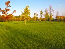 Green Lush Park Stock Photos
