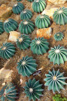 Free Cactus Stock Images - 7782634