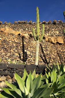 Free Cactus Stock Photo - 7783200
