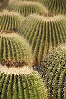 Free Cactus Stock Photography - 7783342