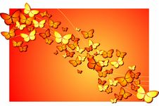 Free Butterflies Royalty Free Stock Image - 7783356