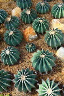 Free Cactus Stock Image - 7783581