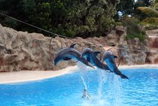 Free Dolphins Jump Out Royalty Free Stock Image - 7784056
