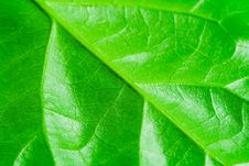 Free Macro View Of Textured Leaf Veins Stock Image - 7784151