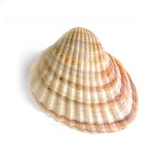 Free Macro Of Shell Isolated On White Royalty Free Stock Images - 7784399