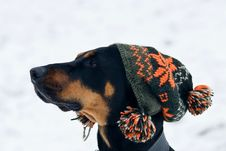 Free Trendy Dog Stock Image - 7784441