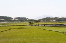 Free Rice Paddy Stock Images - 7784464