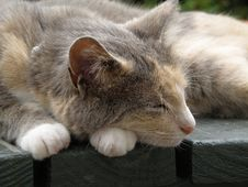 Free Let Sleeping Cats Lie Stock Photos - 7784693