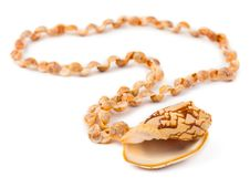 Free Necklace Made Of Sea Shell Stock Photo - 7784760
