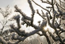 Free Frozen Branches Royalty Free Stock Images - 7784789