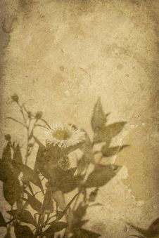 Free Vintage Flower Imprint Background Royalty Free Stock Photos - 7786558