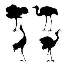 Free Silhouette Of The Cranes Stock Photography - 7788642