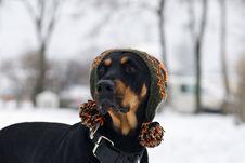 Free Trendy Dog Stock Photography - 7788672