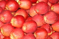 Free Apples Royalty Free Stock Photography - 7789227