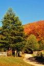 Free Autumn Royalty Free Stock Photos - 7790888