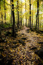 Free Autumn Trail Royalty Free Stock Images - 7792509