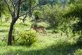 Free Impala Royalty Free Stock Photos - 7793358