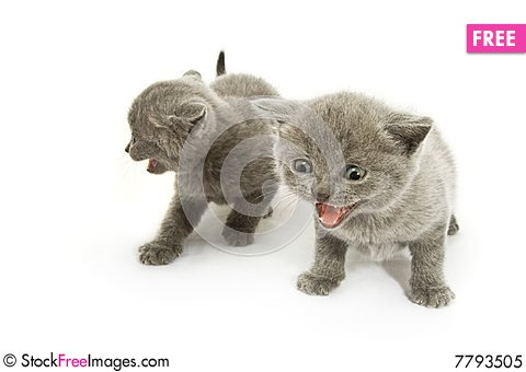 Free Two Kittens Over White Royalty Free Stock Photo - 7793505