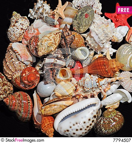 assorted colorful seashells free stock images photos 7794507
