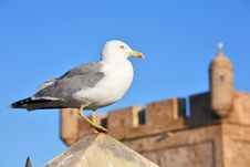 Free Fortress Wall And Lonely Seagull Royalty Free Stock Images - 7790789