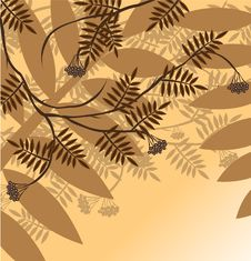 Free Branch Of A Plant Royalty Free Stock Photography - 7791127
