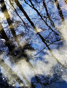 Free Reflection Of Trees Royalty Free Stock Images - 7791609