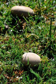 Free Mushrooms Stock Photos - 7791613