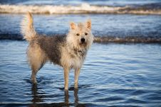 Free Playful Water Dog Stock Images - 7792104