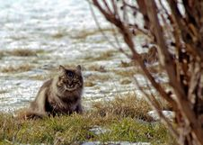 Free Wild Cat Royalty Free Stock Photography - 7792357
