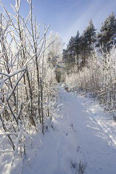Free Path Royalty Free Stock Photo - 7792755