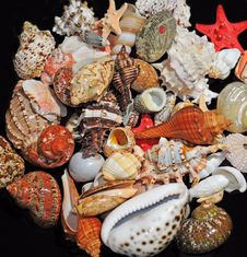 Free Assorted Colorful Seashells Royalty Free Stock Photography - 7794507