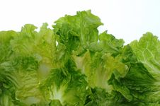 Free Green Salad Stock Image - 7794991