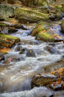 Free Forest Stream Stock Photography - 7795092