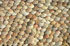 Free Hanging Scallop Shells Stock Photography - 7795902