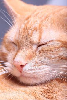 Free Ginger Cat Stock Photo - 7796330