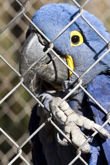 Free Parrot Bird In A Cage Stock Photography - 7797012