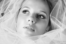 Free Young Bride Royalty Free Stock Photos - 7797668