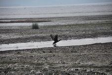 Free Bird Flying Stock Photos - 7798553