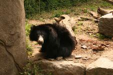Funny Bear Royalty Free Stock Photos