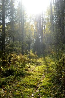 Autumn Taiga Forest To Rot Sontsya And The Sun Behind The Trees Stock Images