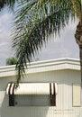 Free Window & Palm Royalty Free Stock Photo - 784055