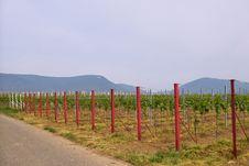 Free Wineyards In Spring Stock Image - 780061