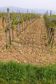 Free Wineyards In Spring Stock Photo - 780230