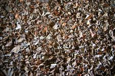 Free Old Leaves Stock Photos - 780363