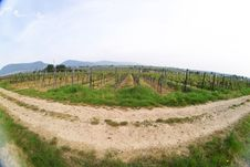 Free Wineyards In Spring Royalty Free Stock Images - 780539