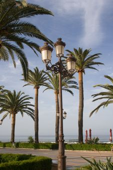 Free Lamp And Palm Trees Stock Image - 781591