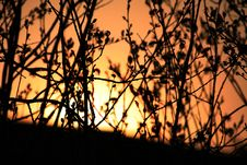 Free Sun In The Branches Stock Photography - 782942