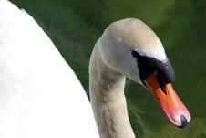 Free Swan Head Stock Image - 783211