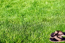 Free Sandals In Grass Stock Photography - 784442